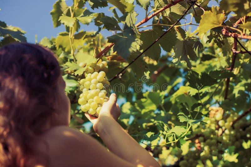 Näck härlig flicka i en vingård på en varm solig afton arkivfoto