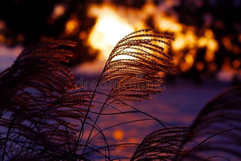 Nähernder Sonnenuntergang lizenzfreies stockbild