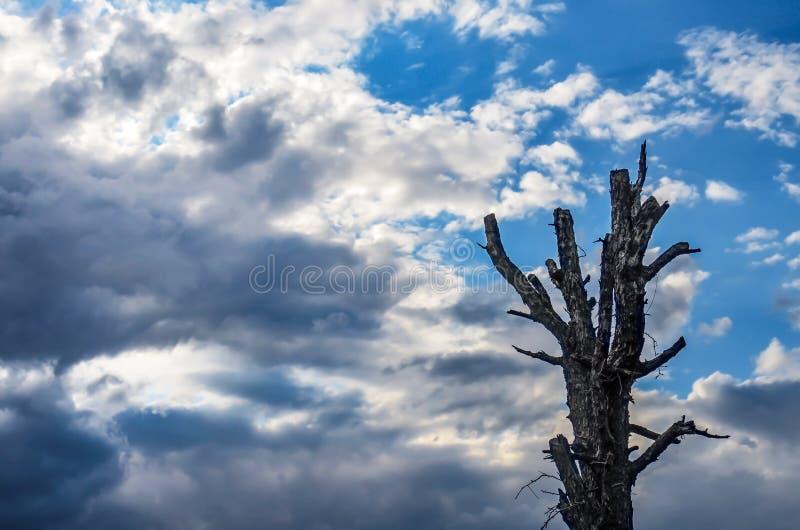 Nähernder Sturm und blauer Himmel Alter toter Baum lizenzfreie stockbilder