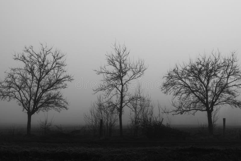 När dimman kommer arkivfoton
