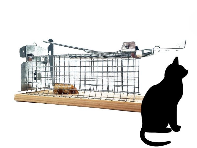 När du bor råttfällan klippte ut vit bakgrund fotografering för bildbyråer