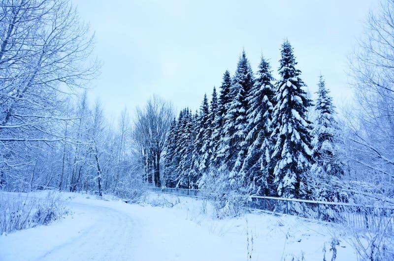 När du går gatan i vinter och snö täckte träd i dimmig dag royaltyfri foto