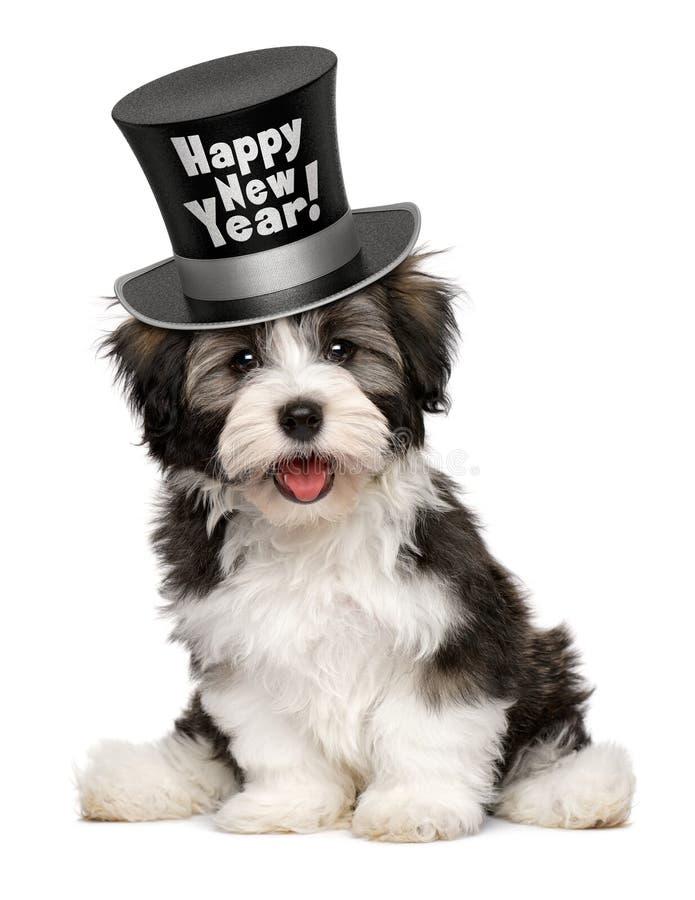 När du ler den havanese valpen bär en bästa hatt för lyckligt nytt år royaltyfri foto