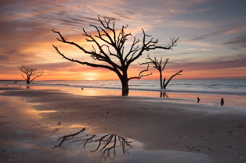 Edisto för Charleston Boneyard strandsoluppgång SC arkivfoton