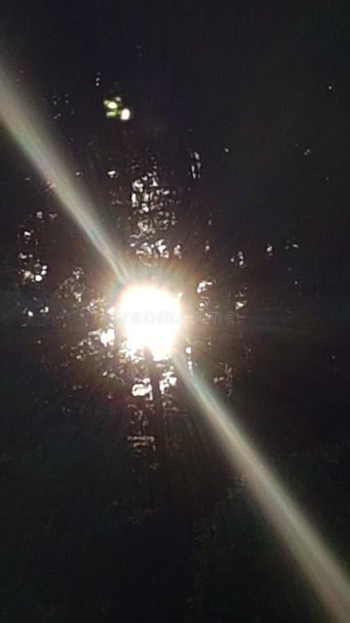 När solen går ner bak träden royaltyfri bild