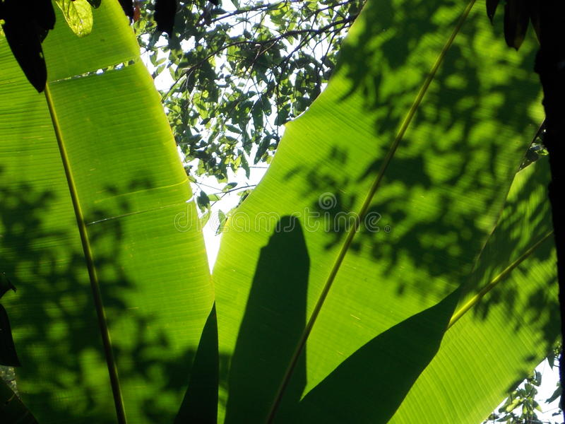 När solljus skiner på sidor i den vintergröna skogen royaltyfri fotografi