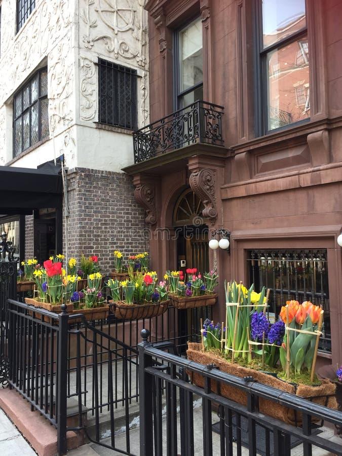 När våren är här, kan du se alla blommor arkivbilder