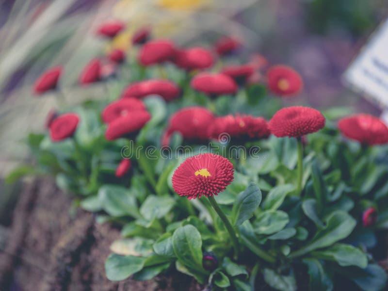 Nära övre bild av den färgrika blomman med oskarp bakgrund arkivbilder