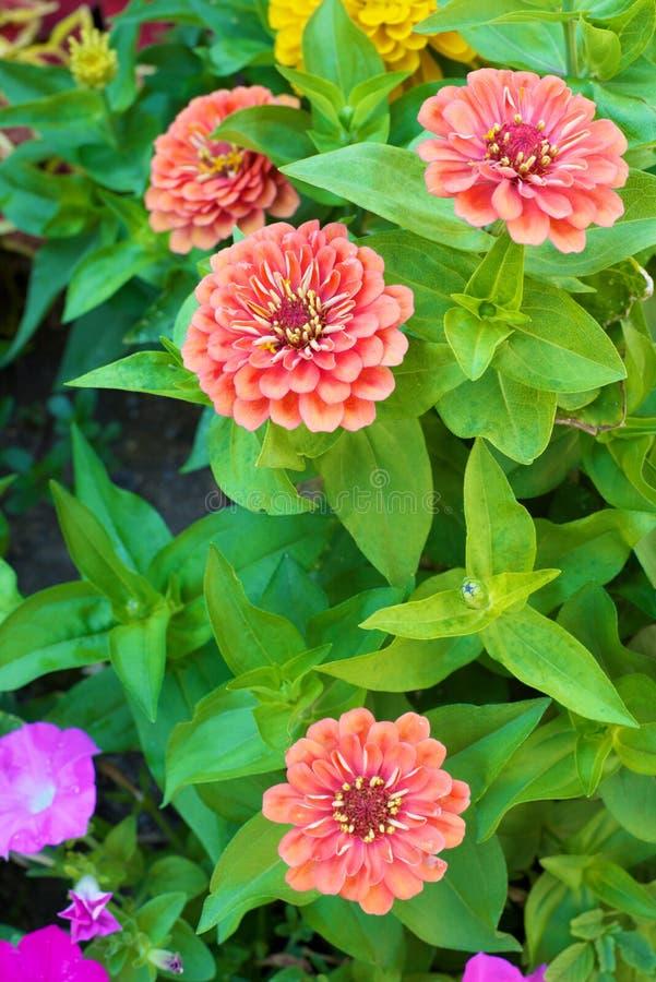 Nära övre för blommor arkivfoton