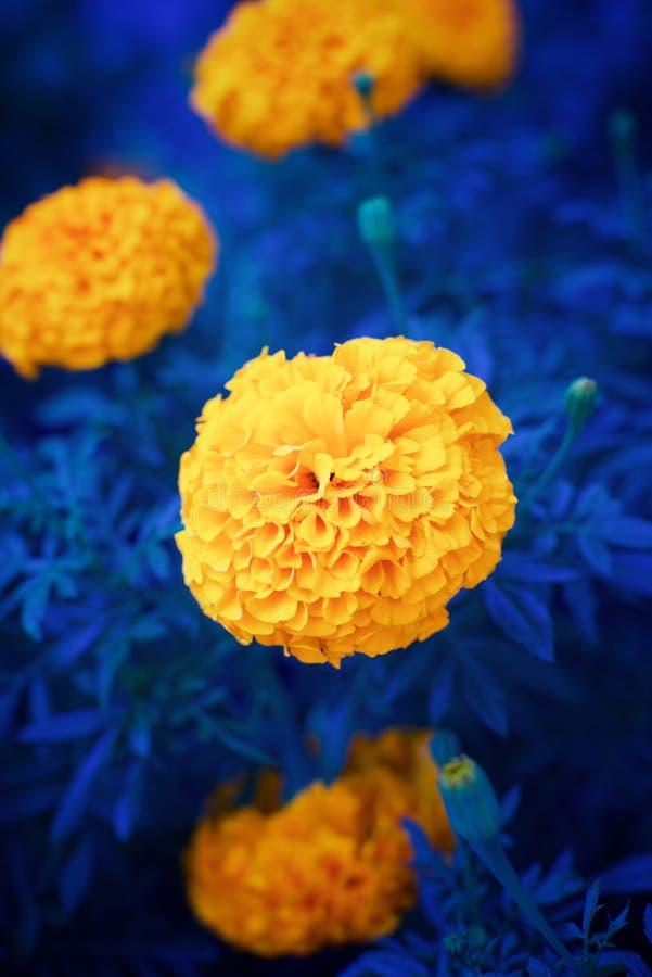 Nära övre för blommor royaltyfri fotografi