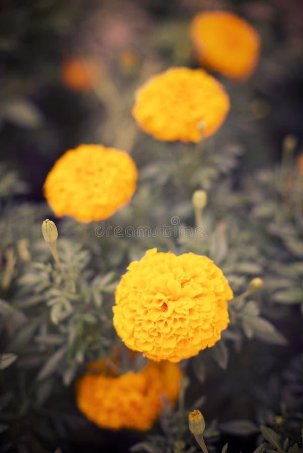 Nära övre för blommor royaltyfri bild