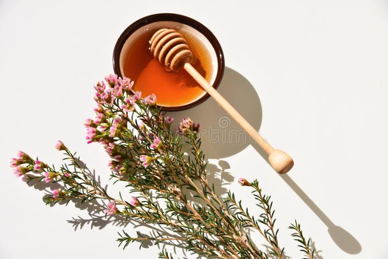 Nära övre för för Manuka honung och träd arkivfoto
