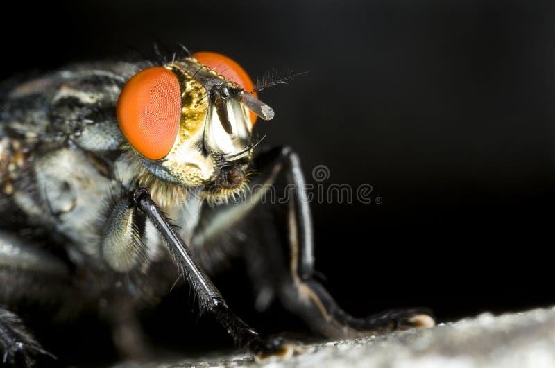 Download Nära övre för spyfluga arkivfoto. Bild av natur, djurliv - 37349288