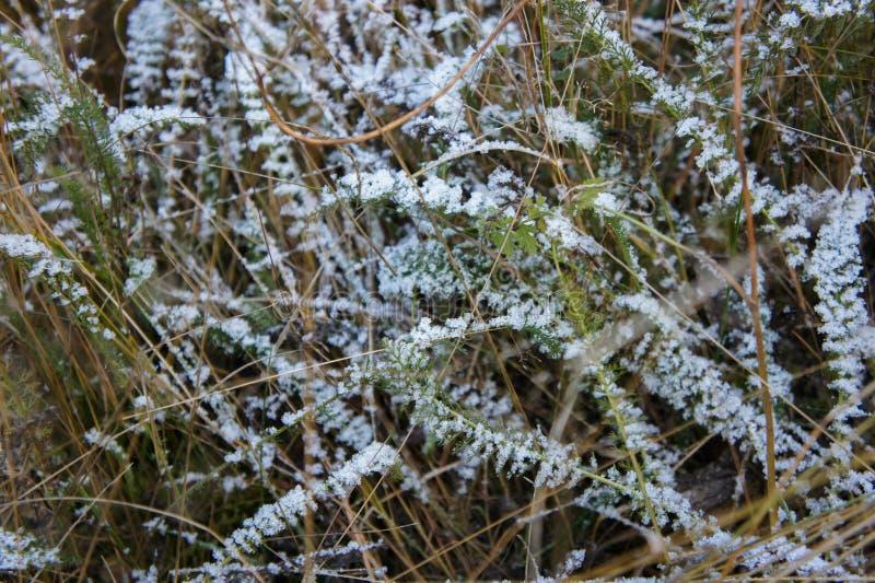 Nära övre foto av frostigt morgongräs, makroskott royaltyfria foton