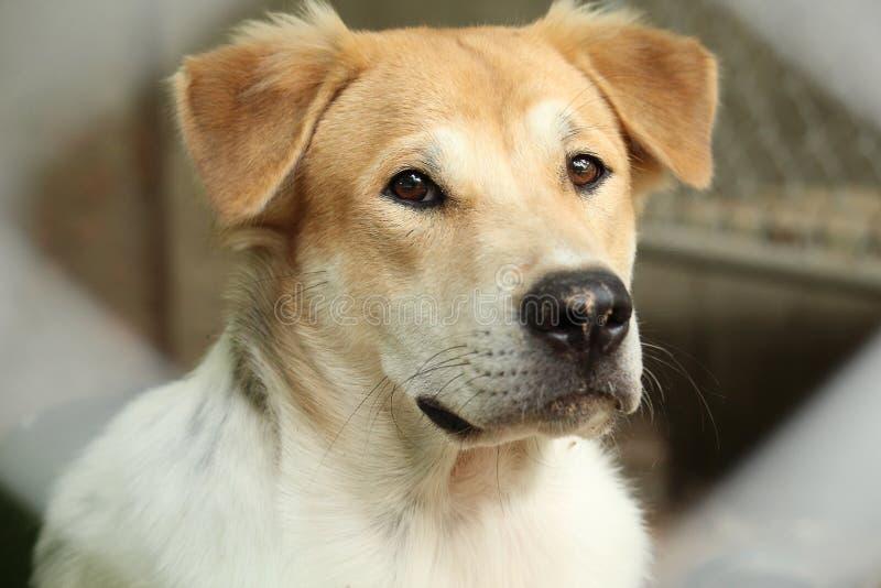 Nära övre huvudnos av den utomhus- härliga unga thailändska hunden arkivfoto