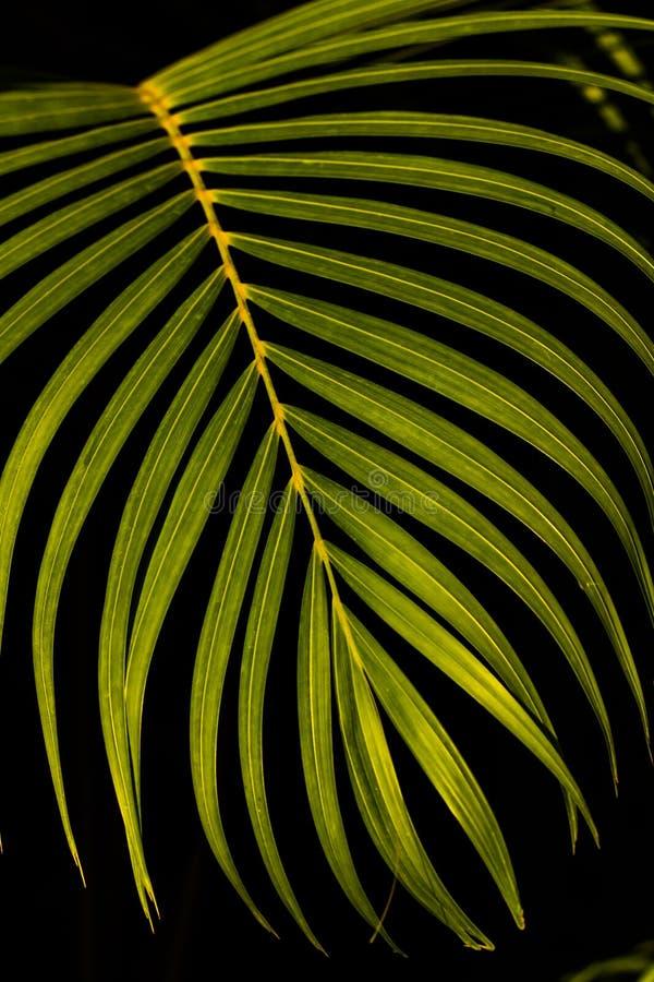 Nära övre leaf royaltyfria foton