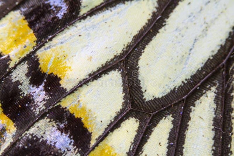 Nära övre makro av en fjärilsvinge royaltyfri bild