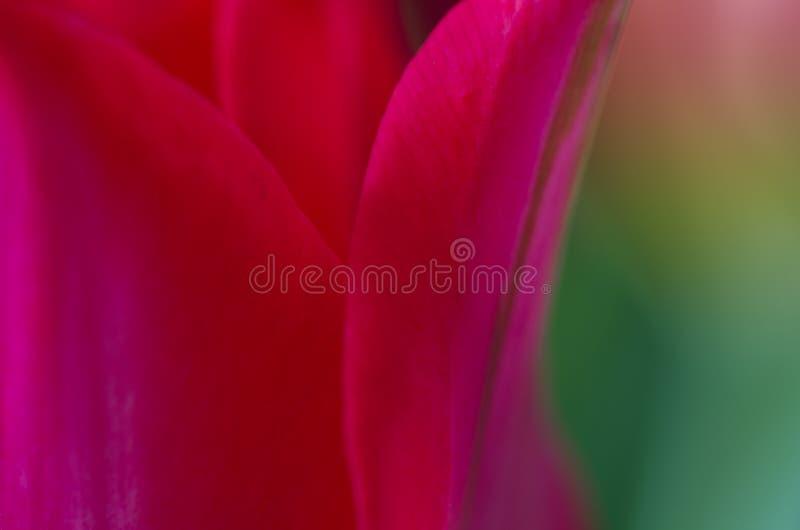 Nära övre rött för blomma och grönt arkivfoton