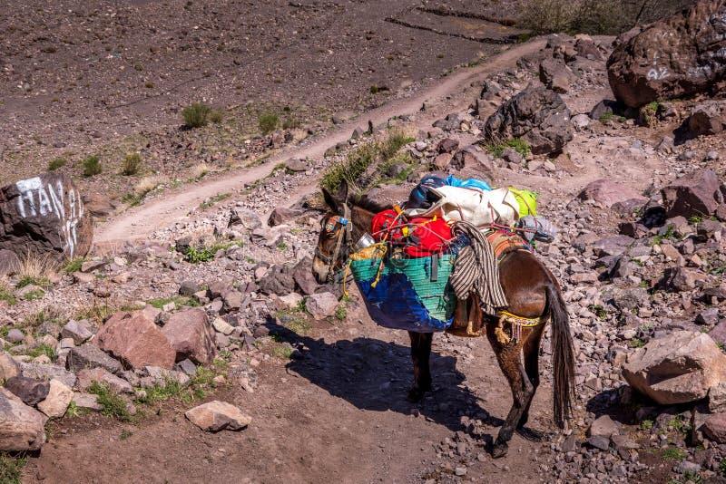 Nära övre sikt av bärande påsar för en häst royaltyfria bilder