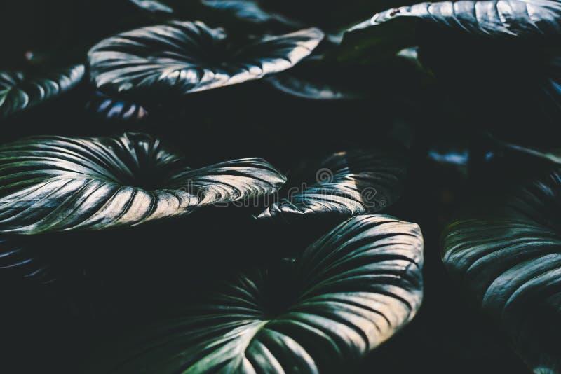 Nära övre sikt av de jätte- bladen i den Miami botaniska trädgården arkivbilder