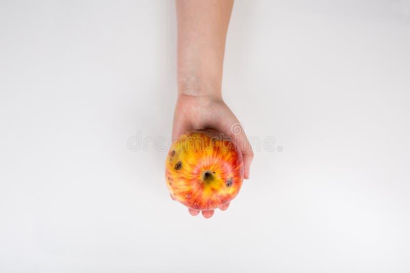 Nära en mänsklig hand som håller ett något skadat äpple isolerat på vit bakgrund med kopieringsutrymme Biofrukter brukar ruttna arkivbilder