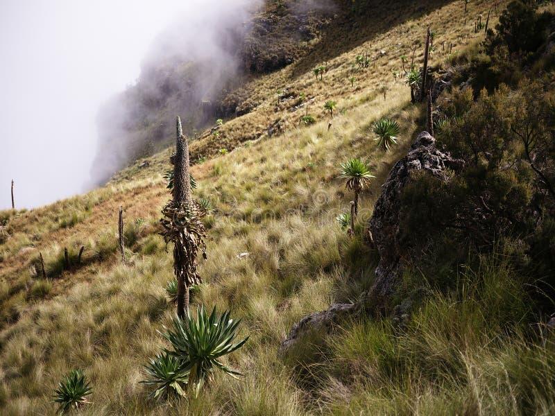 Nära Gogo Imet, Simien berg arkivfoto
