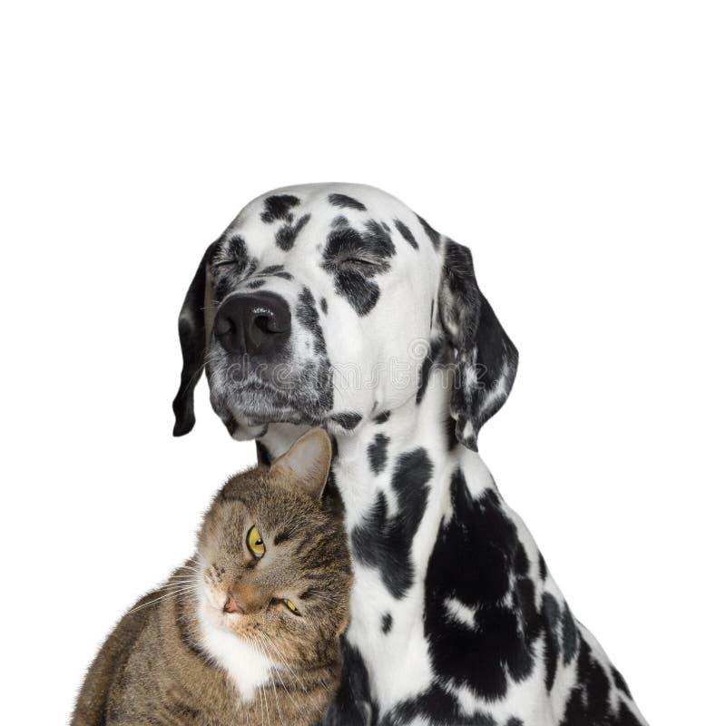 Nära kamratskap mellan en katt och en hund arkivbild