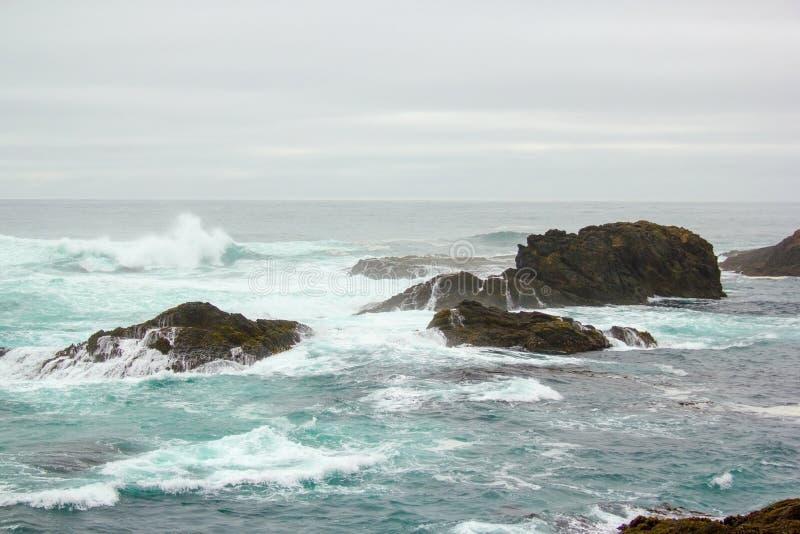 Nära kustreven på den Mendocino uddedelstatsparken.