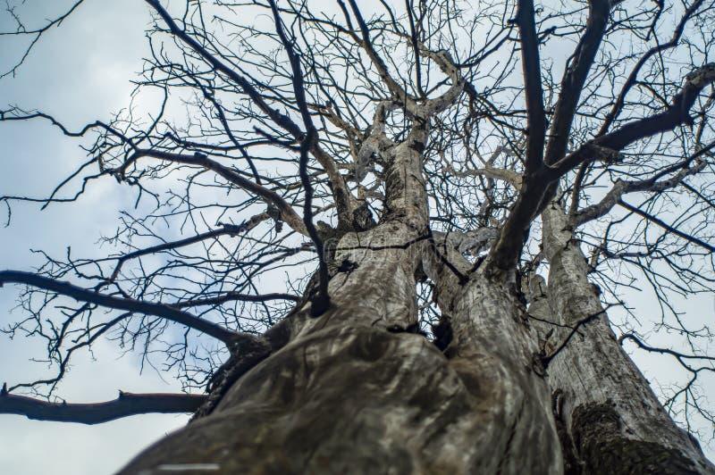 Nära sikt av ett gammalt dött träd Botten besk?dar royaltyfria foton