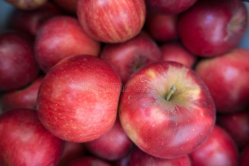 Nära sikt av mogna röda äpplen Jonathan royaltyfria foton