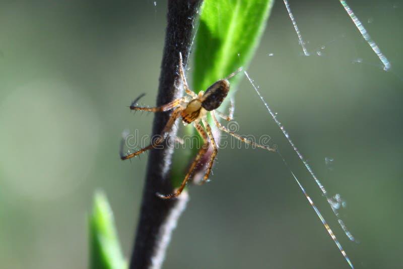 Nära upp färgrik sikt av spindeln på bladet arkivfoton