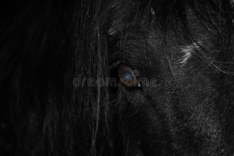 Närbild av ögat av en svart häst royaltyfri fotografi