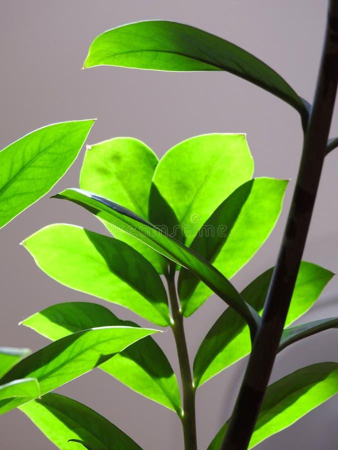 Närbild av brunn-tända gröna sidor och att göra en lek av ljus och skugga royaltyfria bilder