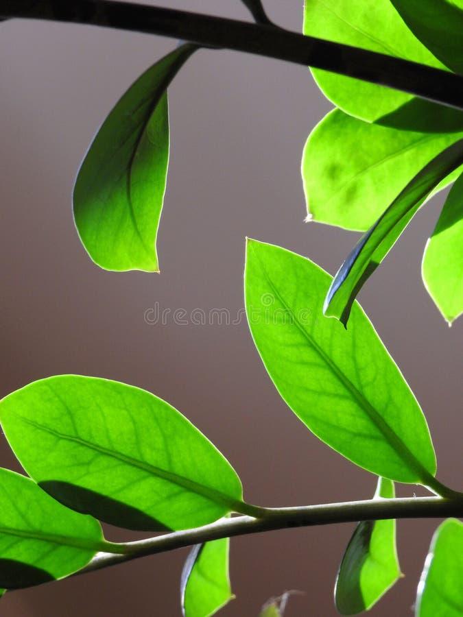 Närbild av brunn-tända gröna sidor och att göra en lek av ljus och skugga arkivbilder