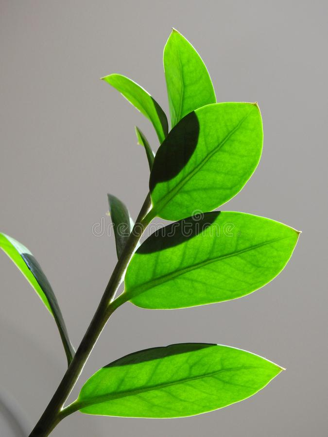 Närbild av brunn-tända gröna sidor på en grå bakgrund royaltyfri foto
