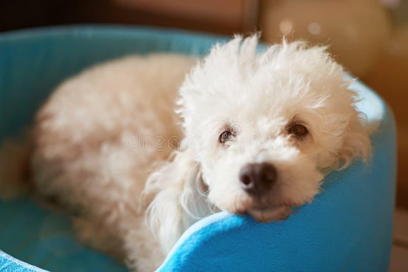 Närbild av den gulliga fluffiga hunden royaltyfria foton