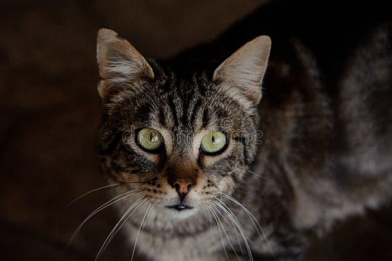 Närbild av den insiktsfulla katten i djurt skydd royaltyfri foto
