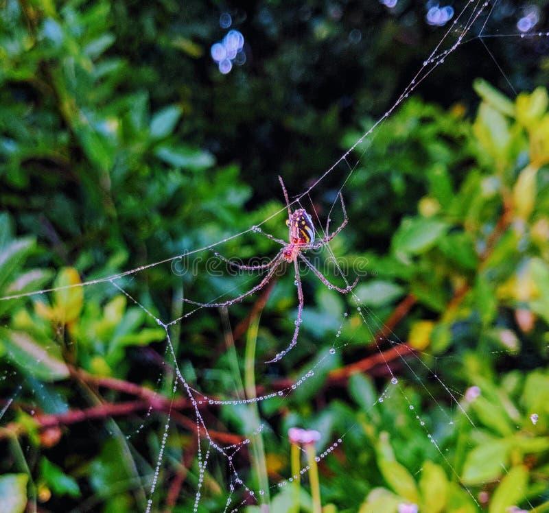 Närbild av den röda spindeln på rengöringsduk arkivfoto