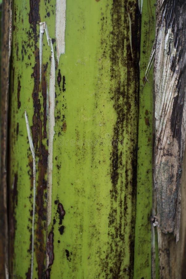 Närbild av det tropiska skället för träd` s royaltyfria bilder