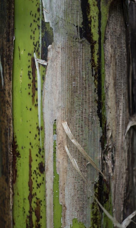 Närbild av det tropiska skället för träd` s arkivfoton