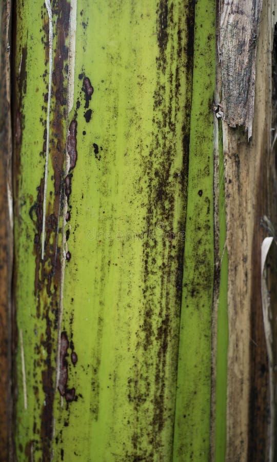 Närbild av det tropiska skället för träd` s royaltyfria foton