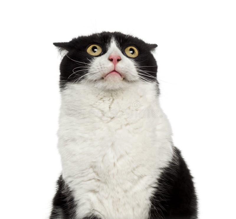 Närbild av en blyg blandad-avel katt som ser upp royaltyfria foton
