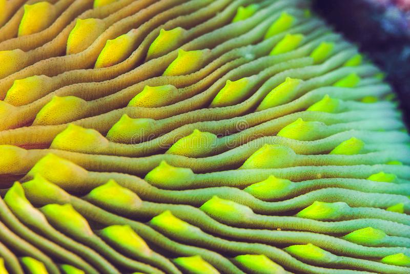 Närbild av en champinjon Coral Skeleton royaltyfri foto