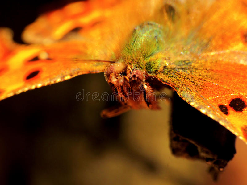 Närbild av en fjäril royaltyfri bild