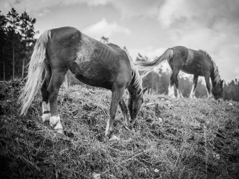 Närbild av en flock av hästar royaltyfri foto