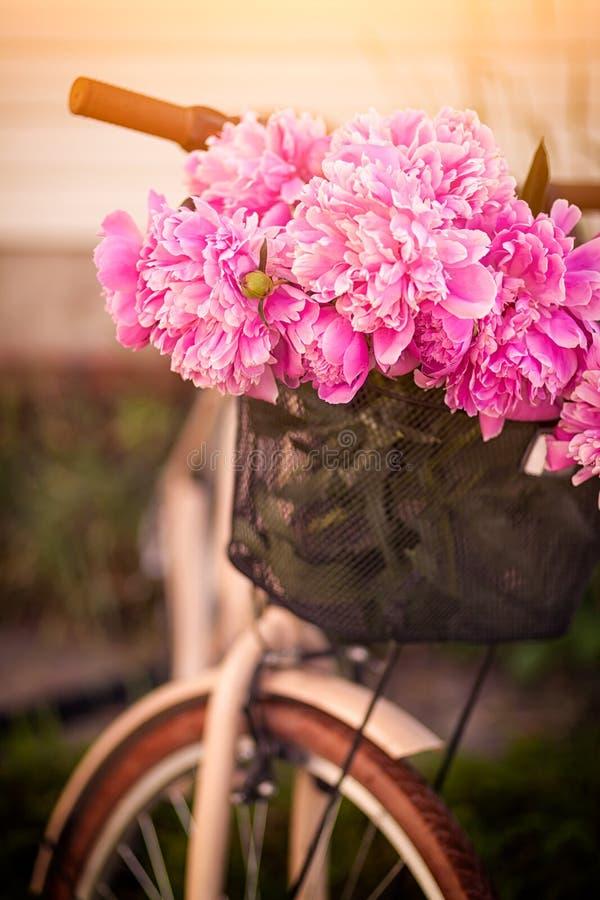 Närbild av en härlig ny bukett av rosa pioner royaltyfria foton