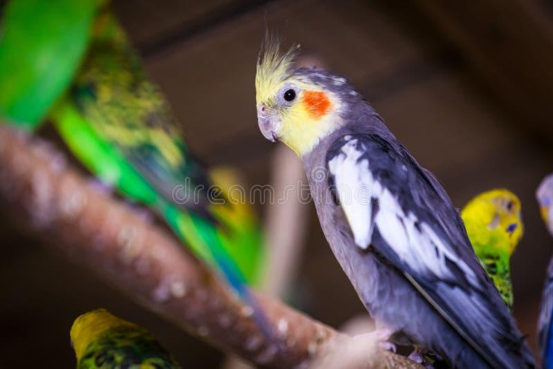 Närbild av en härlig papegoja tre royaltyfri bild