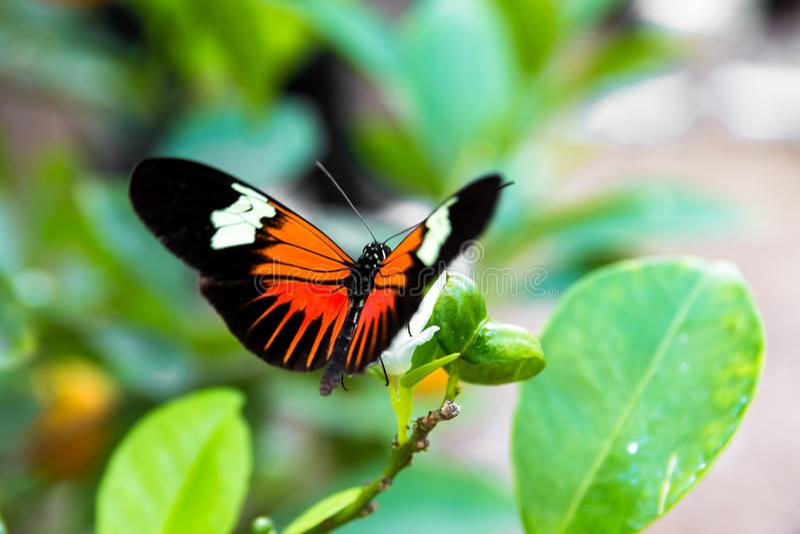 Närbild av en tropisk fjäril royaltyfria foton