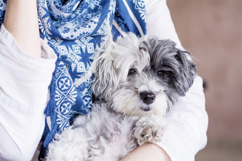 Närbild av en vit hund i kramar för en kvinna arkivbild