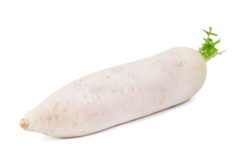 Närbild av en vit rova som isoleras på en vit bakgrund Bantar näringsrika grönsaker för sommar för sunt royaltyfri bild